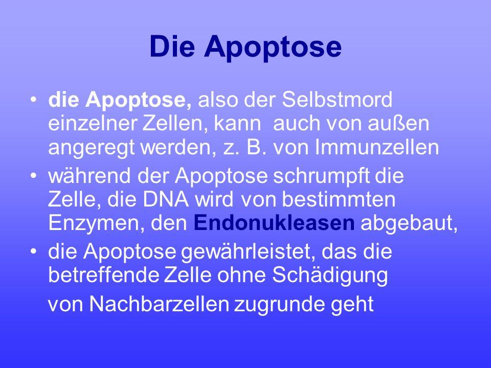 Die Apoptose die Apoptose, also der Selbstmord einzelner Zellen, kann auch von außen angeregt werden, z. B. von Immunzellen während der Apoptose schru