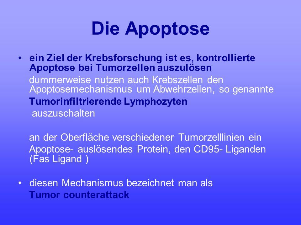Die Apoptose ein Ziel der Krebsforschung ist es, kontrollierte Apoptose bei Tumorzellen auszulösen dummerweise nutzen auch Krebszellen den Apoptosemec