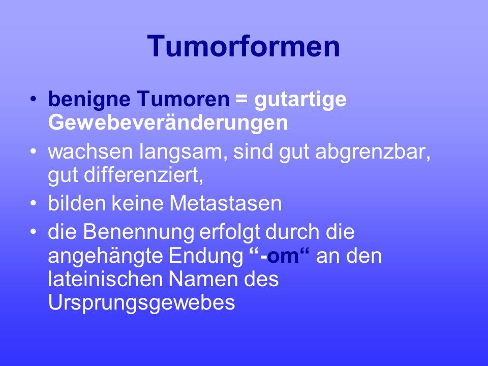 Tumorformen benigne Tumoren = gutartige Gewebeveränderungen wachsen langsam, sind gut abgrenzbar, gut differenziert, bilden keine Metastasen die Benen