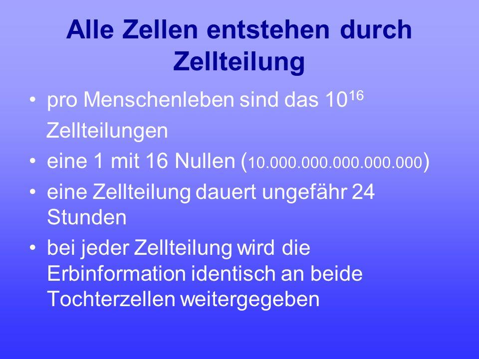 Alle Zellen entstehen durch Zellteilung pro Menschenleben sind das 10 16 Zellteilungen eine 1 mit 16 Nullen ( 10.000.000.000.000.000 ) eine Zellteilun