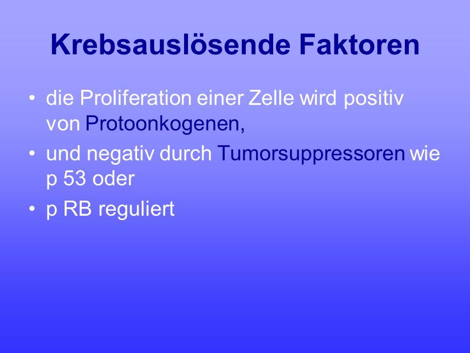 Krebsauslösende Faktoren die Proliferation einer Zelle wird positiv von Protoonkogenen, und negativ durch Tumorsuppressoren wie p 53 oder p RB regulie