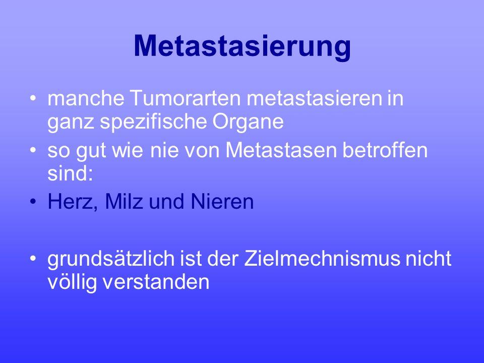 Metastasierung manche Tumorarten metastasieren in ganz spezifische Organe so gut wie nie von Metastasen betroffen sind: Herz, Milz und Nieren grundsät