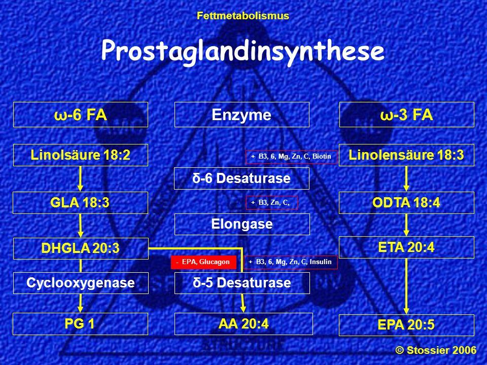 © Stossier 2006 Fettmetabolismus LipoxygenaseCyclooxygenase Prostaglandinsynthese DHGLA 20:3Arachidonsäure 20:4 LeukotrienePG 2PG 1 + B3, 6, Mg, C, GSH, Alk, E - Vit E, NSAR, Aspirin - DHGLA, Boswelia