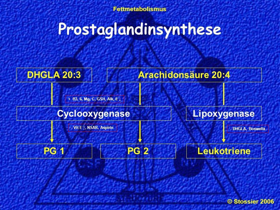 © Stossier 2006 Fettmetabolismus LipoxygenaseCyclooxygenase Prostaglandinsynthese DHGLA 20:3Arachidonsäure 20:4 LeukotrienePG 2PG 1 + B3, 6, Mg, C, GS