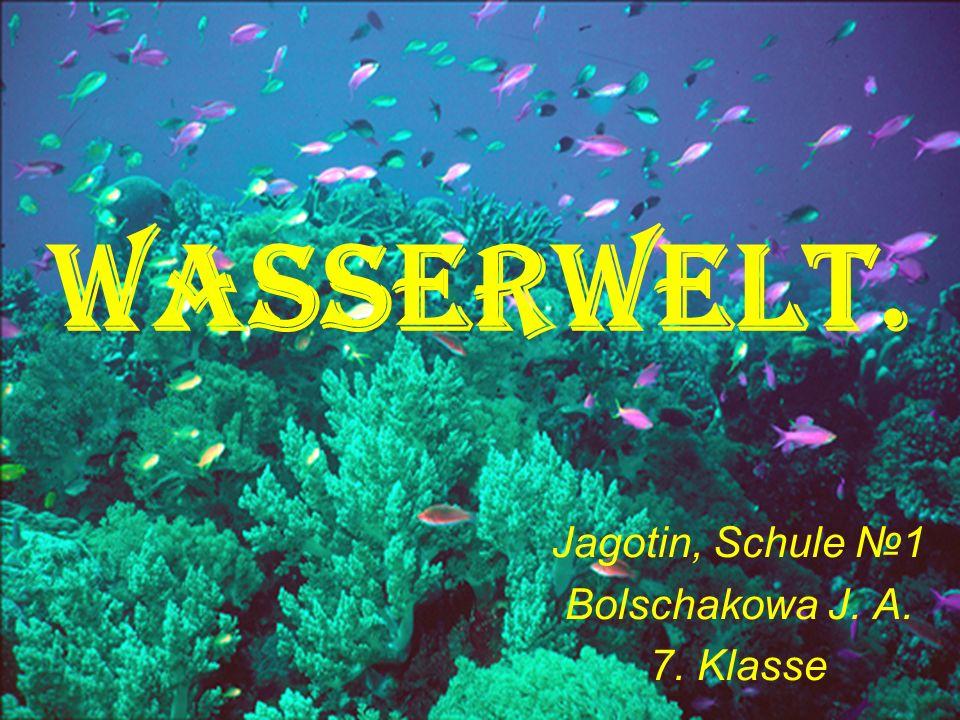 Wasserwelt. Jagotin, Schule 1 Bolschakowa J. A. 7. Klasse