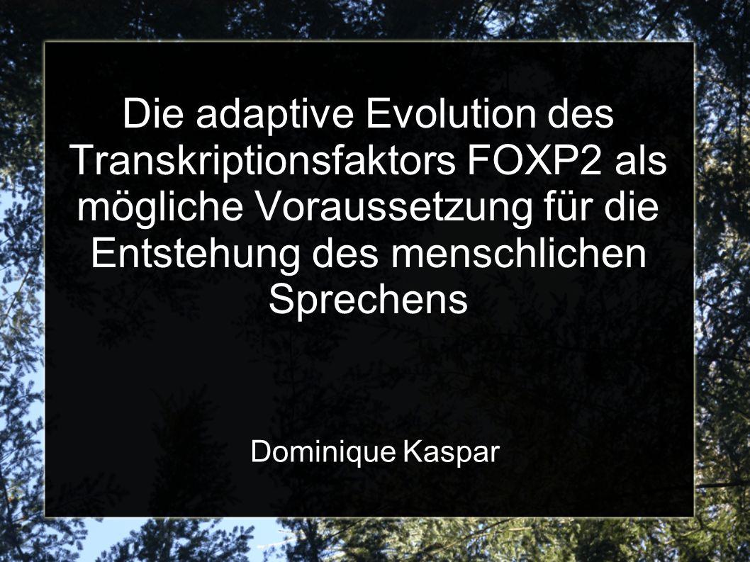 Humanes FOXP2 als rezente Mutation in der Phylogenie des Menschen aDNA Untersuchung von Knochen des Neandertalers zeigt moderne FOXP2 Variante 3 mögliche Szenarien: 1) Genfluss Neandertaler Homo sapiens 2) FOXP2 beim gemeinsamen Vorfahren von Neandertaler und Homo sapiens; selective sweep nach Abspaltung 3) FOXP2 beim gemeinsamen Vorfahren von Neandertaler und Homo sapiens; selective sweep auf diesen Haplotyp