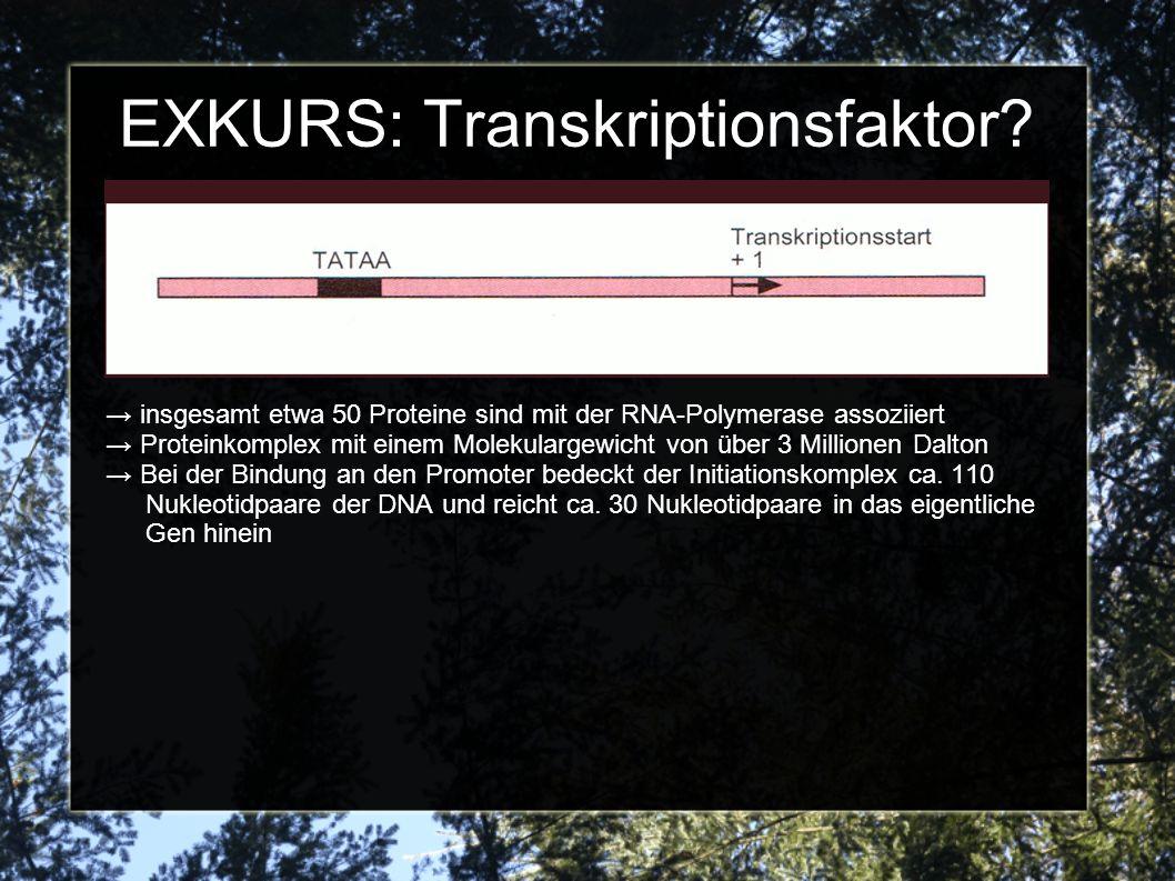 EXKURS: Transkriptionsfaktor? insgesamt etwa 50 Proteine sind mit der RNA-Polymerase assoziiert Proteinkomplex mit einem Molekulargewicht von über 3 M