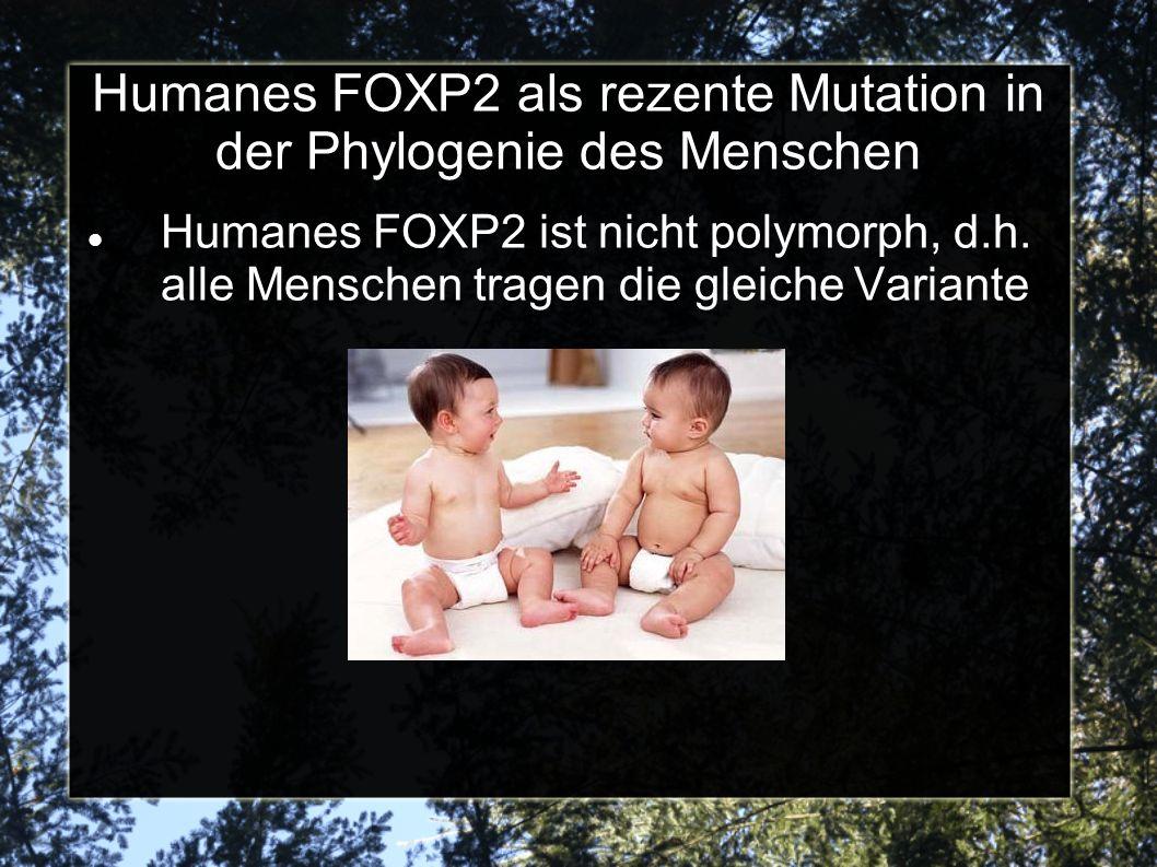 Humanes FOXP2 als rezente Mutation in der Phylogenie des Menschen Humanes FOXP2 ist nicht polymorph, d.h.