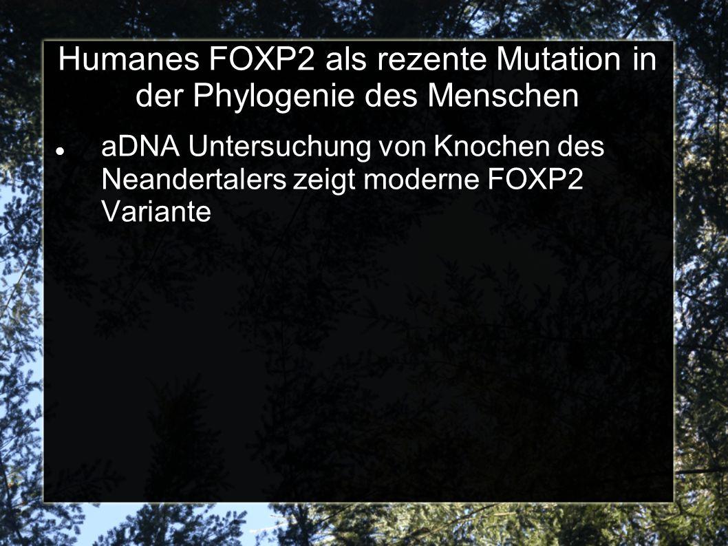 Humanes FOXP2 als rezente Mutation in der Phylogenie des Menschen aDNA Untersuchung von Knochen des Neandertalers zeigt moderne FOXP2 Variante