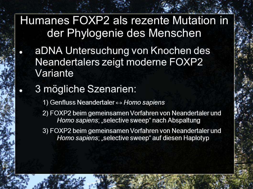 Humanes FOXP2 als rezente Mutation in der Phylogenie des Menschen aDNA Untersuchung von Knochen des Neandertalers zeigt moderne FOXP2 Variante 3 mögli