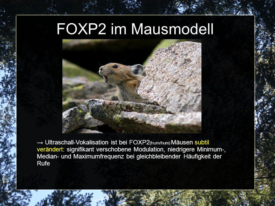 FOXP2 im Mausmodell Ultraschall-Vokalisation ist bei FOXP2 (hum/hum) Mäusen subtil verändert: signifikant verschobene Modulation, niedrigere Minimum-, Median- und Maximumfrequenz bei gleichbleibender Häufigkeit der Rufe