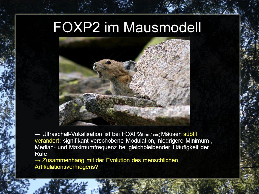 FOXP2 im Mausmodell Ultraschall-Vokalisation ist bei FOXP2 (hum/hum) Mäusen subtil verändert: signifikant verschobene Modulation, niedrigere Minimum-, Median- und Maximumfrequenz bei gleichbleibender Häufigkeit der Rufe Zusammenhang mit der Evolution des menschlichen Artikulationsvermögens?