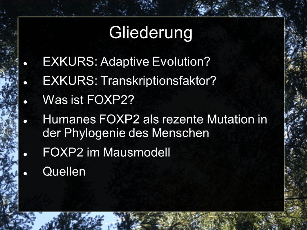 Gliederung EXKURS: Adaptive Evolution? EXKURS: Transkriptionsfaktor? Was ist FOXP2? Humanes FOXP2 als rezente Mutation in der Phylogenie des Menschen