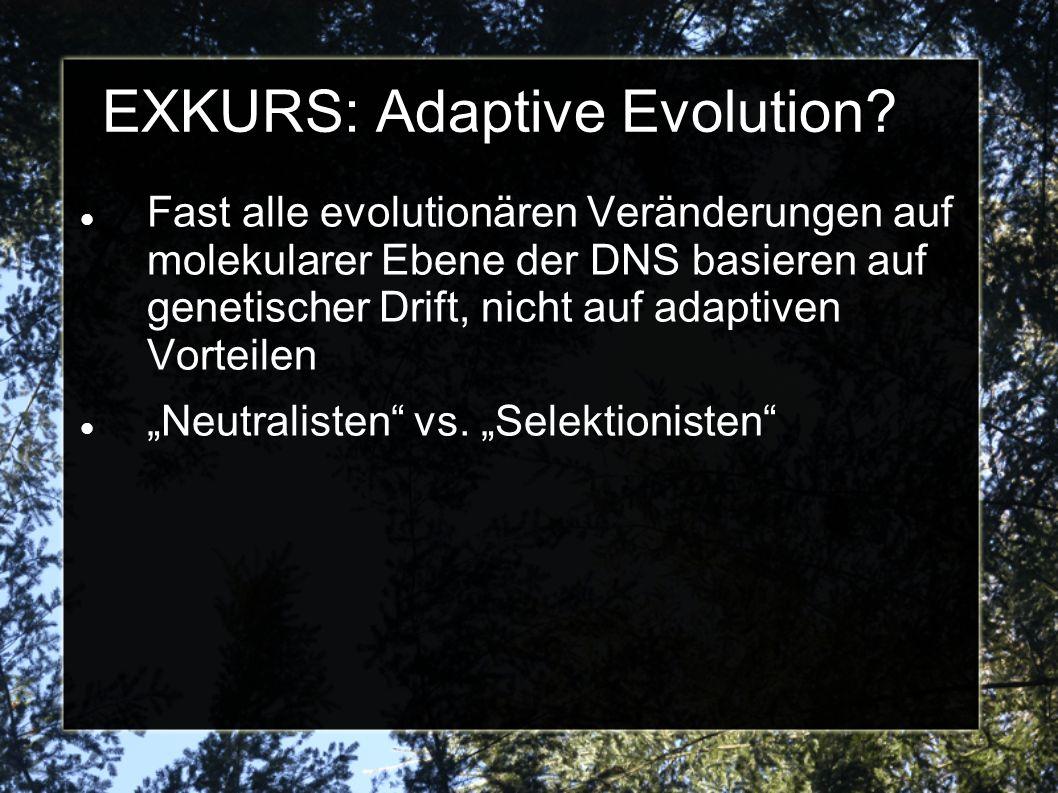 EXKURS: Adaptive Evolution? Fast alle evolutionären Veränderungen auf molekularer Ebene der DNS basieren auf genetischer Drift, nicht auf adaptiven Vo