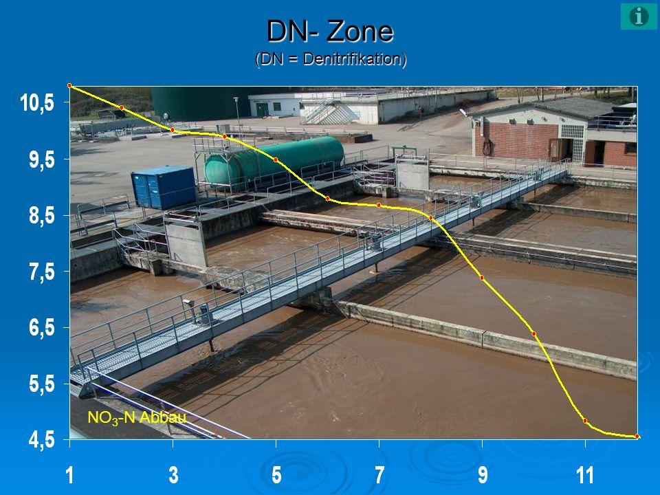 DN- Zone (DN = Denitrifikation) NO 3 -N Abbau