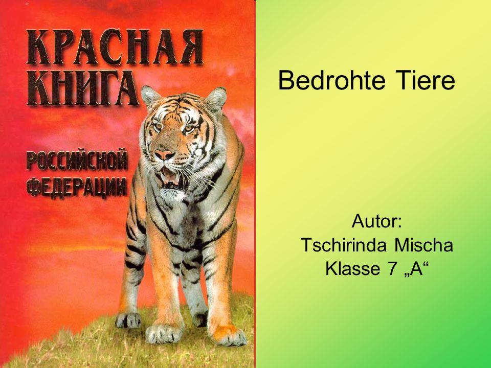 Autor: Tschirinda Mischa Klasse 7 A Bedrohte Tiere