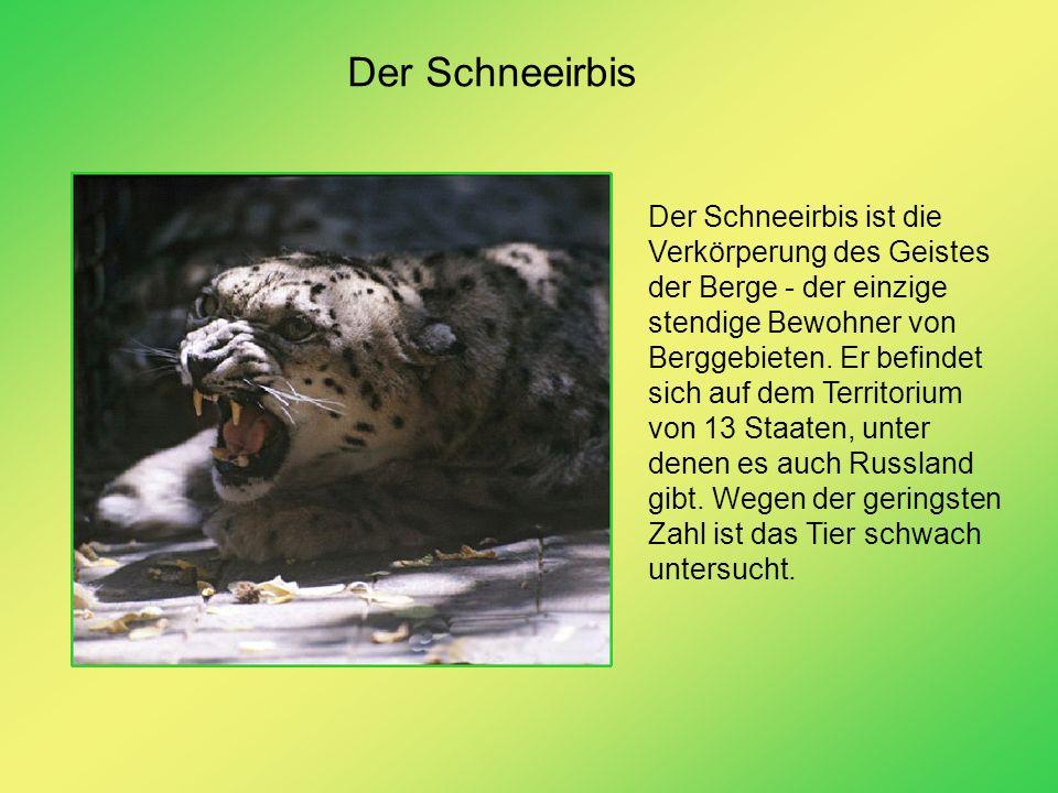 Der Schneeirbis Der Schneeirbis ist die Verkörperung des Geistes der Berge - der einzige stendige Bewohner von Berggebieten. Er befindet sich auf dem