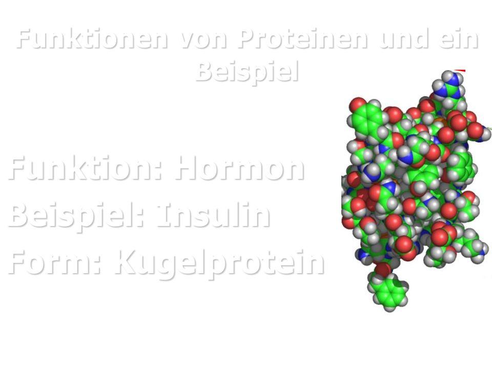 Funktionen von Proteinen und ein Beispiel Funktion: Hormon Beispiel: Insulin Form: Kugelprotein