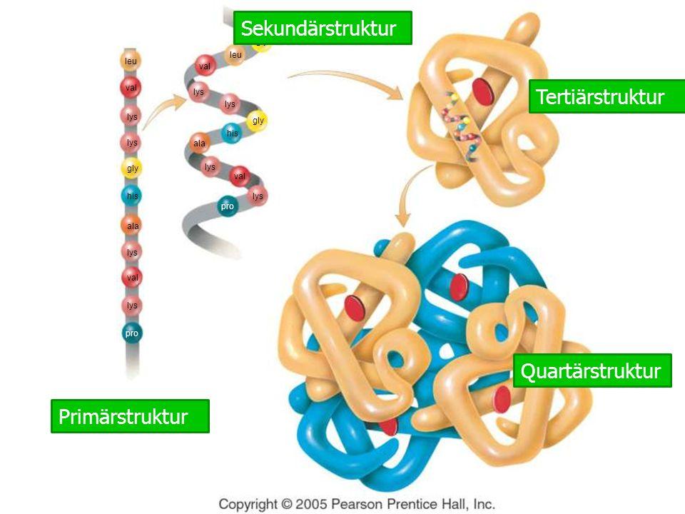 leu val lys gly his ala lys val lys pro Primärstruktur Reihenfolge der Aminosäuren, mit Peptidbindungen verbunden