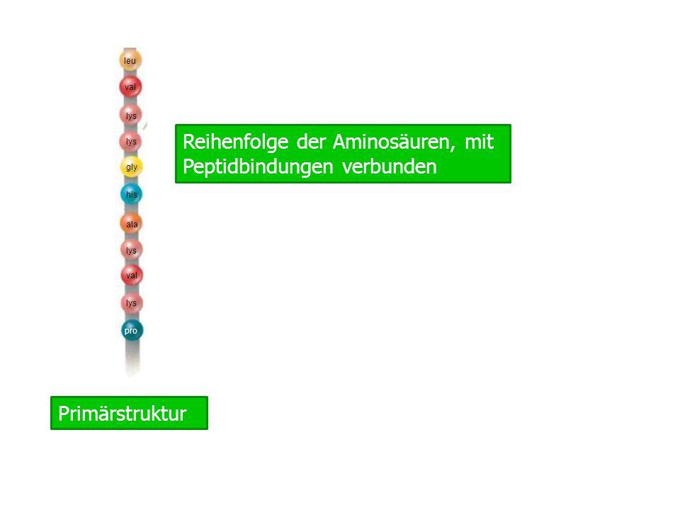 Sekundärstruktur Helix oder β-Faltblatt durch H-Brücken zwischen Aminosöuren