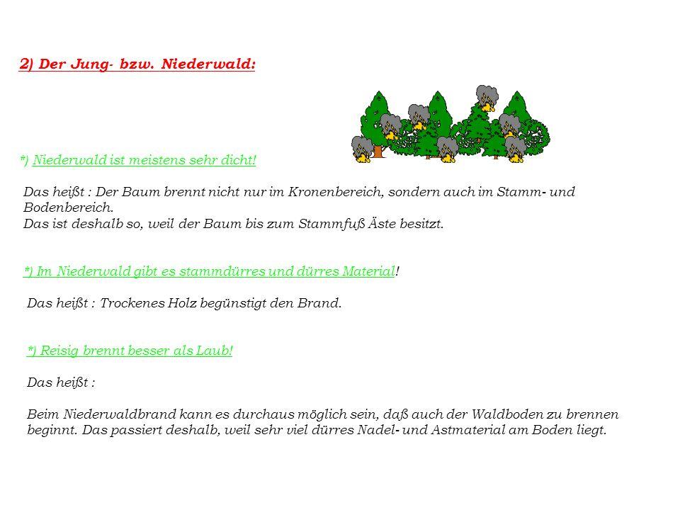 2) Der Jung- bzw. Niederwald: *) Niederwald ist meistens sehr dicht.