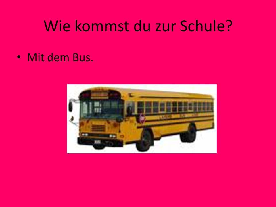 Wie kommst du zur Schule? Mit dem Bus.