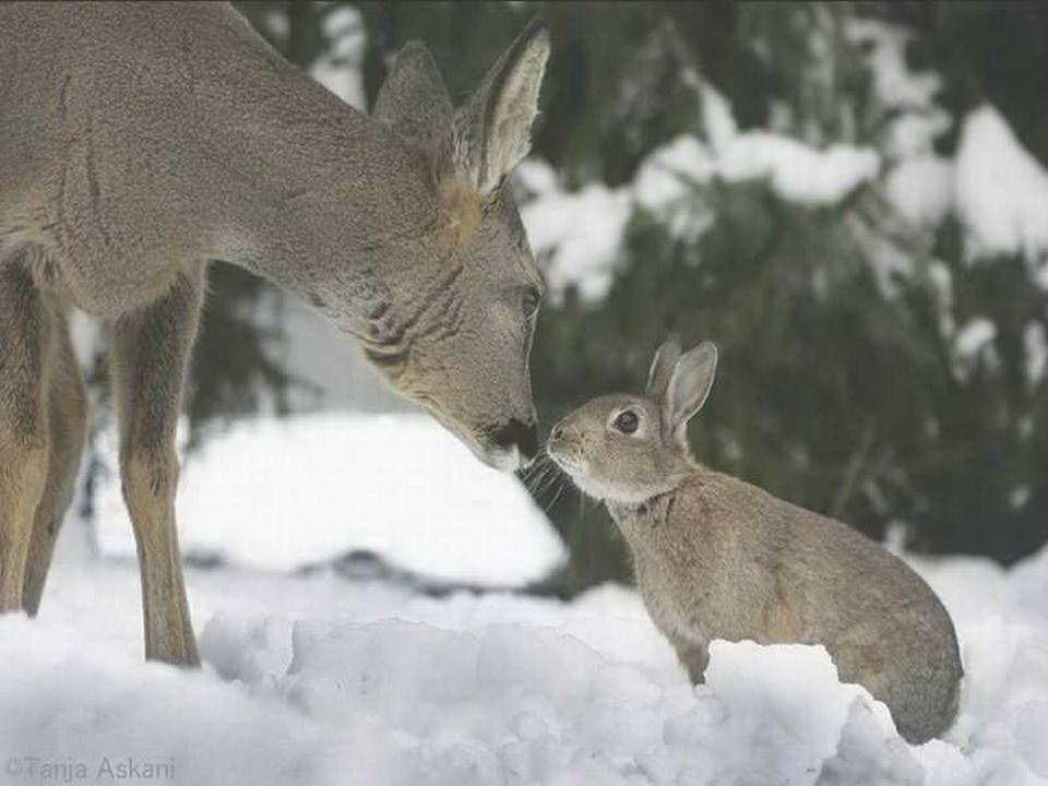 Könnt ihr euch an Bambi und das Häschen erinnern? Gut, wir haben sie soeben wiedergefunden!