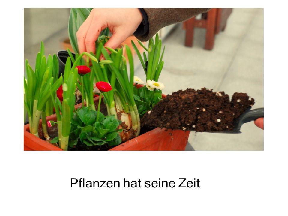 Ausreißen, was gepflanzt ist, hat seine Zeit