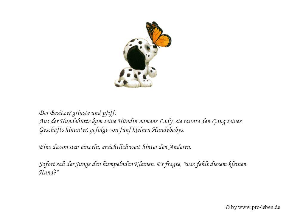 © by www.pro-leben.de Der Mann erklärte, dass als der Kleine geboren wurde, der Tierarzt meinte, er habe ein kaputtes Gelenk und wird für den Rest seines Lebens humpeln.