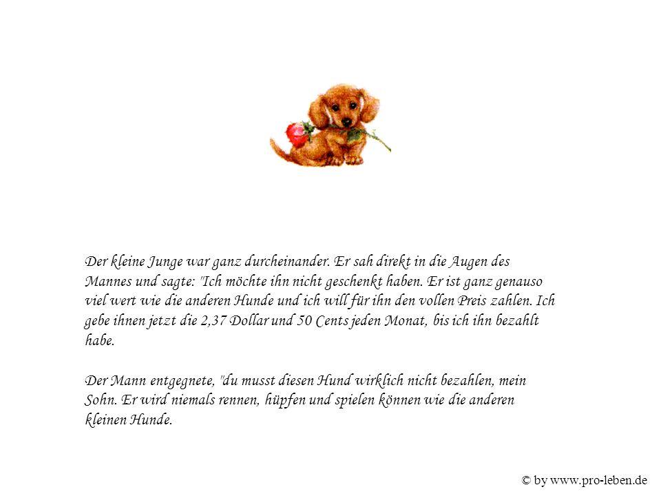 © by www.pro-leben.de Der kleine Junge war ganz durcheinander.