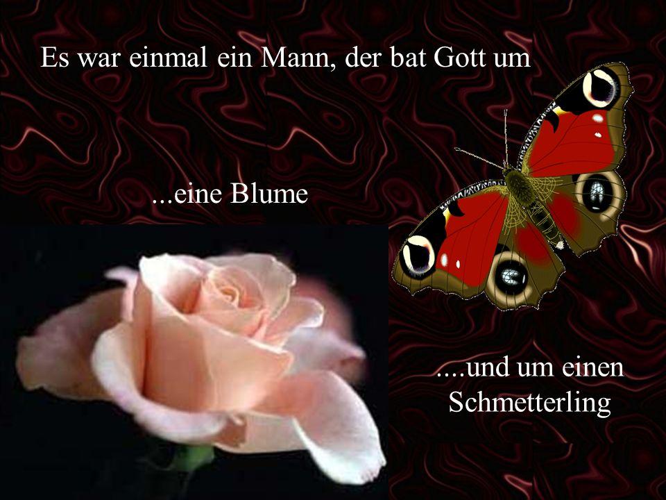 Es war einmal ein Mann, der bat Gott um...eine Blume....und um einen Schmetterling