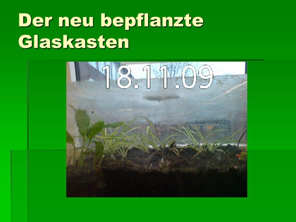Der neu bepflanzte Glaskasten