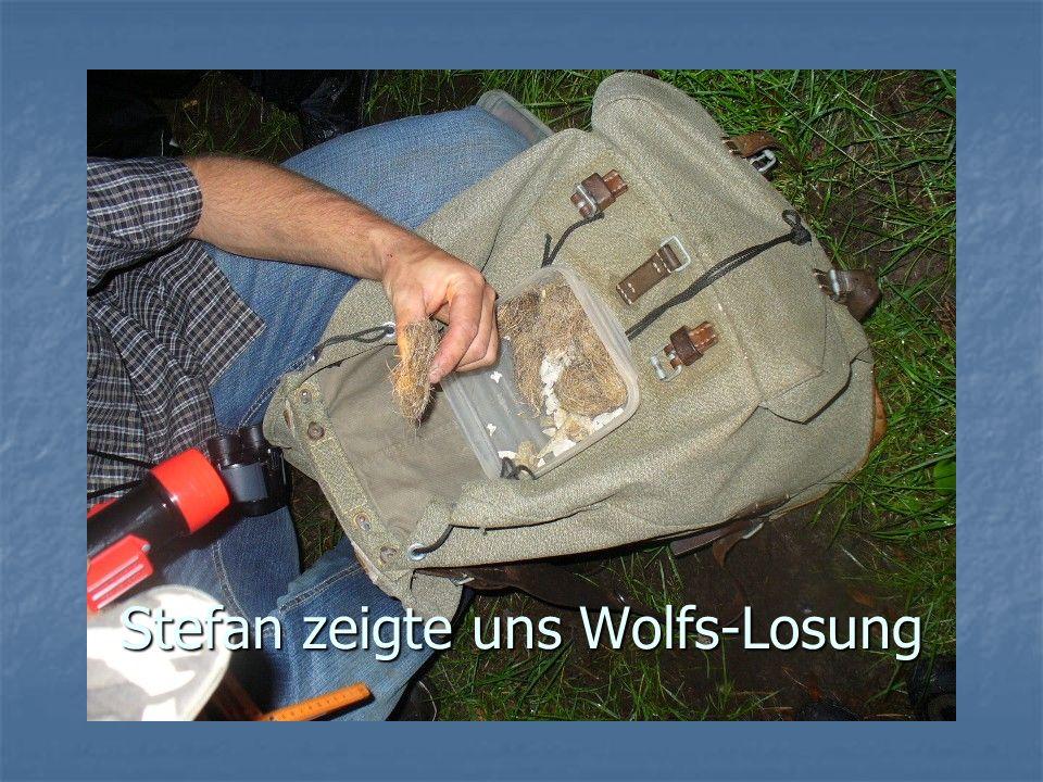 Stefan zeigte uns Wolfs-Losung