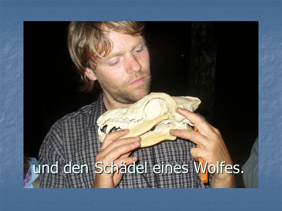 und den Schädel eines Wolfes.