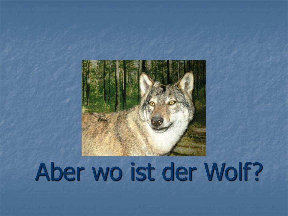 Aber wo ist der Wolf?
