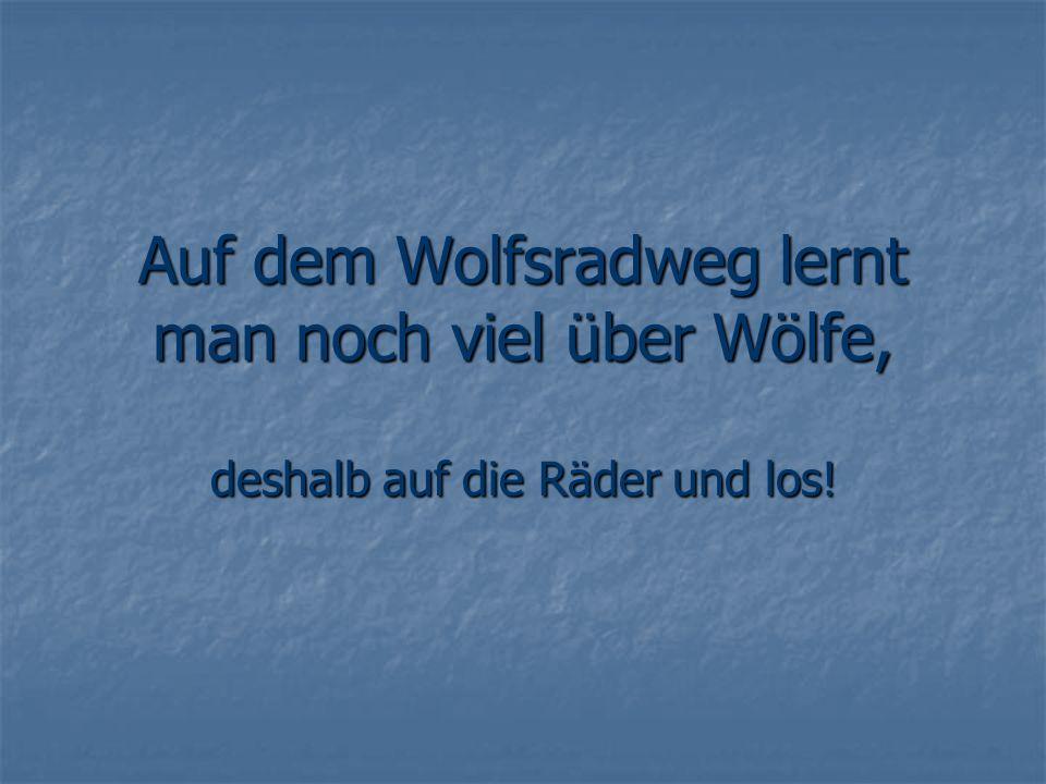 Auf dem Wolfsradweg lernt man noch viel über Wölfe, deshalb auf die Räder und los!