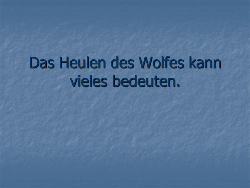 Das Heulen des Wolfes kann vieles bedeuten.