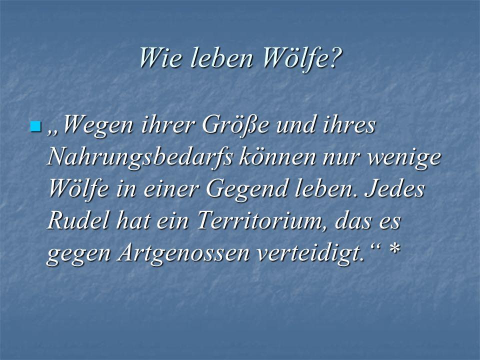 Wie leben Wölfe? Wegen ihrer Größe und ihres Nahrungsbedarfs können nur wenige Wölfe in einer Gegend leben. Jedes Rudel hat ein Territorium, das es ge