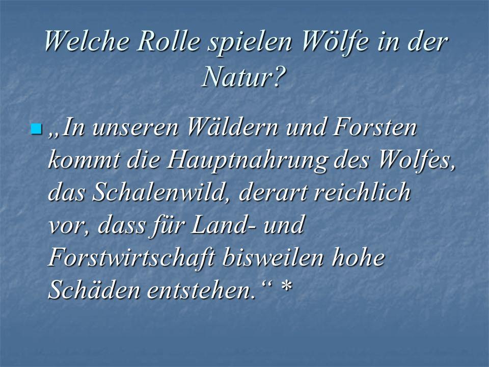 Welche Rolle spielen Wölfe in der Natur? In unseren Wäldern und Forsten kommt die Hauptnahrung des Wolfes, das Schalenwild, derart reichlich vor, dass