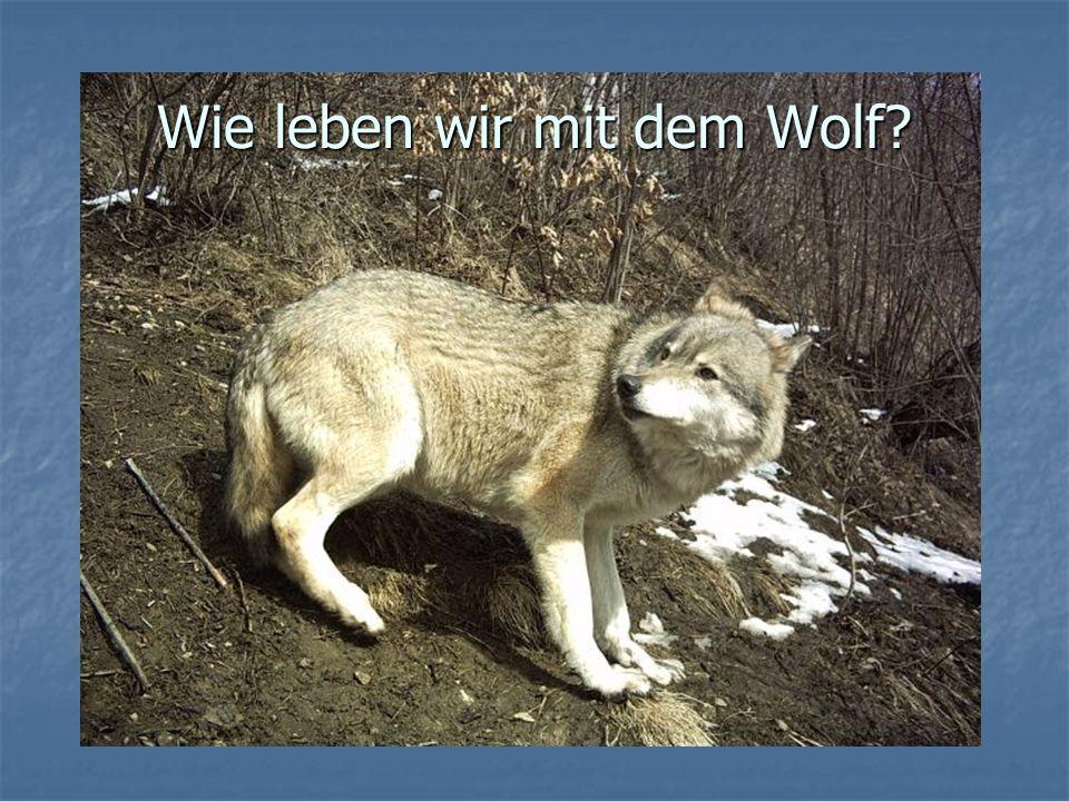 Wie leben wir mit dem Wolf?
