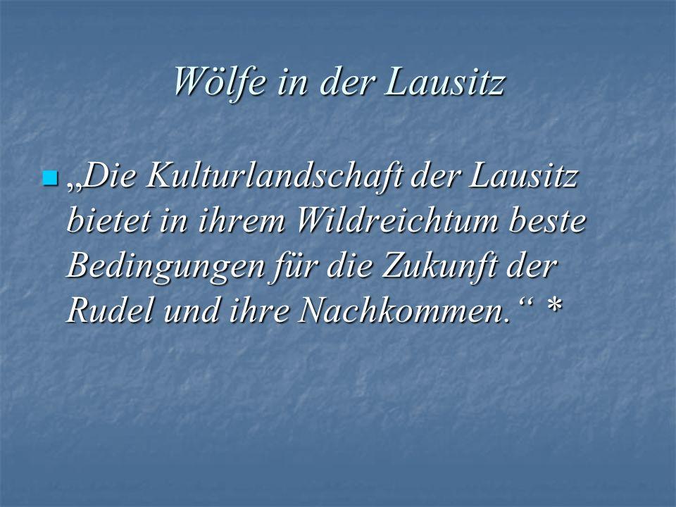 Wölfe in der Lausitz Die Kulturlandschaft der Lausitz bietet in ihrem Wildreichtum beste Bedingungen für die Zukunft der Rudel und ihre Nachkommen. *D
