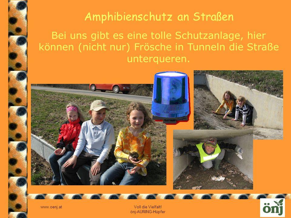 www.oenj.at Voll die Vielfalt! önj-AURING-Hüpfer Amphibienschutz an Straßen Bei uns gibt es eine tolle Schutzanlage, hier können (nicht nur) Frösche i
