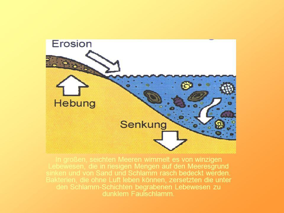In großen, seichten Meeren wimmelt es von winzigen Lebewesen, die in riesigen Mengen auf den Meeresgrund sinken und von Sand und Schlamm rasch bedeckt