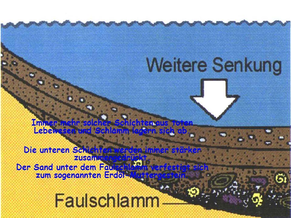 Immer mehr solcher Schichten aus toten Lebewesen und Schlamm lagern sich ab. Die unteren Schichten werden immer stärker zusammengedrückt. Der Sand unt