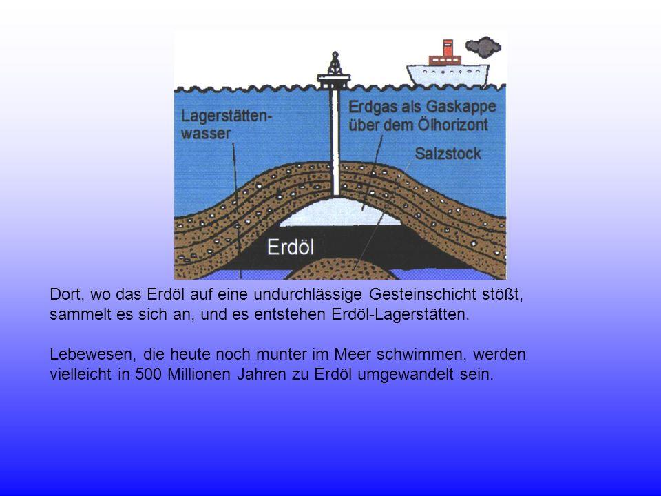 Dort, wo das Erdöl auf eine undurchlässige Gesteinschicht stößt, sammelt es sich an, und es entstehen Erdöl-Lagerstätten. Lebewesen, die heute noch mu