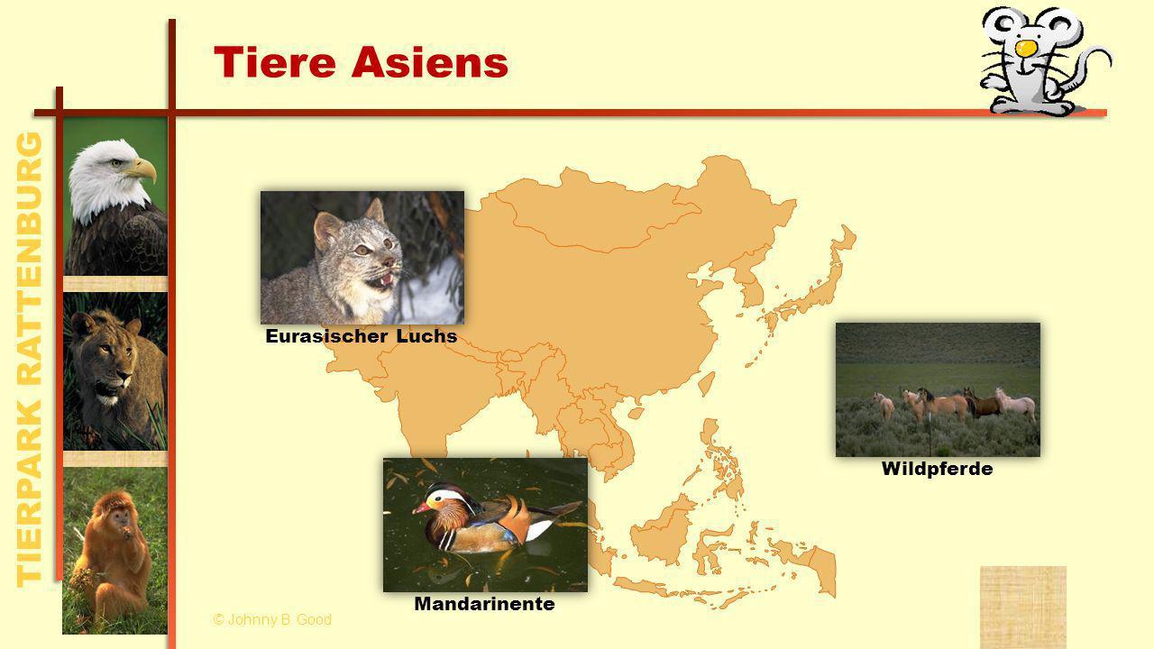 TIERPARK RATTENBURG Tiere Asiens MandarinenteEurasischer Luchs Wildpferde © Johnny B. Good