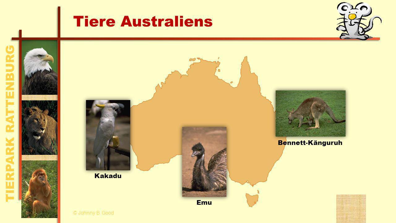 TIERPARK RATTENBURG Tiere Australiens KakaduEmu Bennett-Känguruh © Johnny B. Good