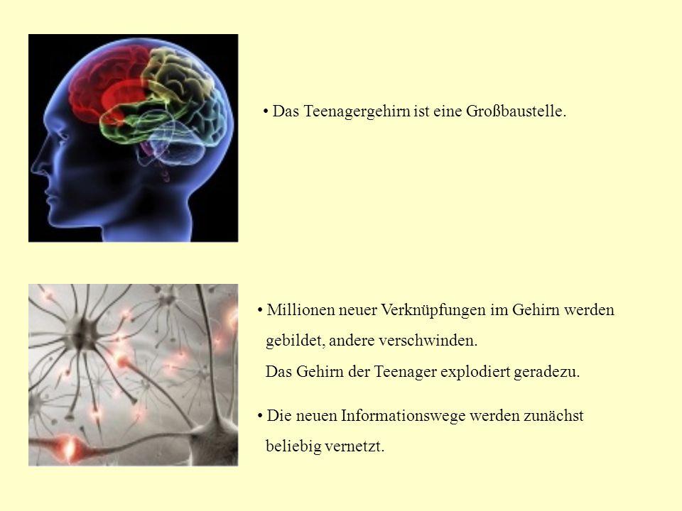 Millionen neuer Verknüpfungen im Gehirn werden gebildet, andere verschwinden.