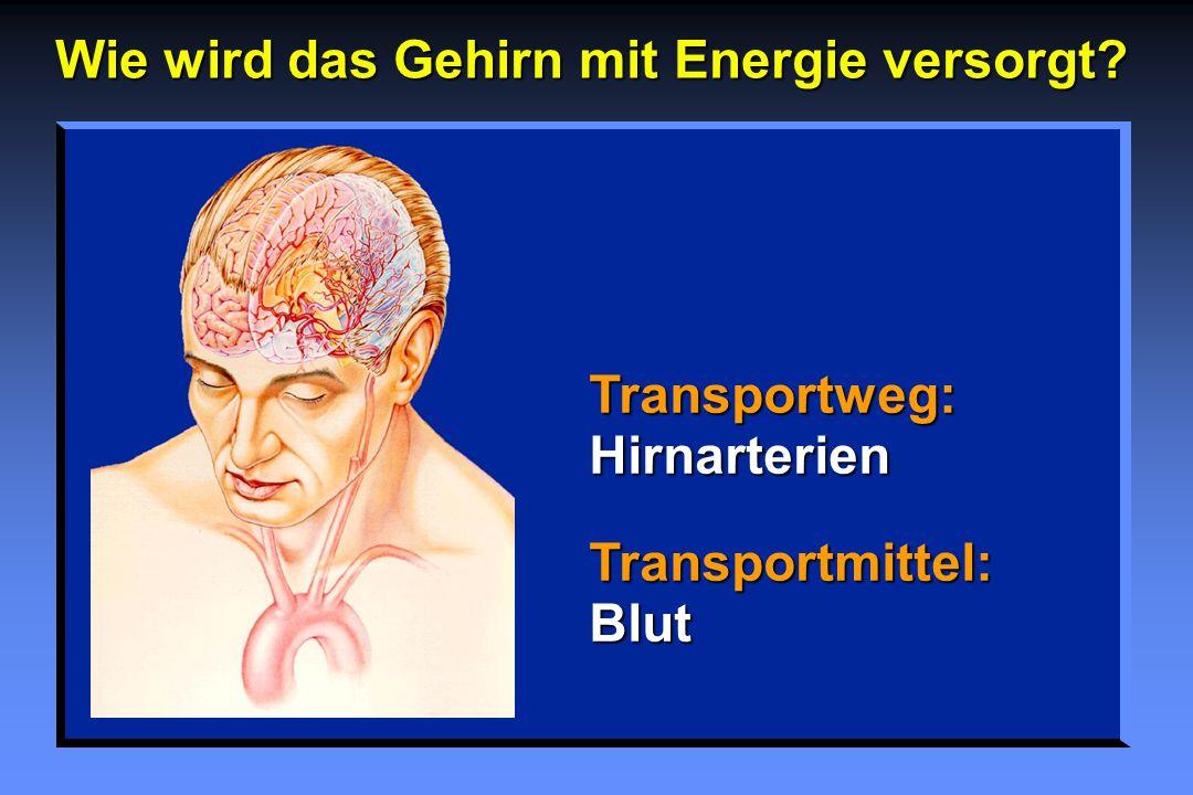 Wie wird das Gehirn mit Energie versorgt? Transportweg: Hirnarterien Transportmittel: Blut