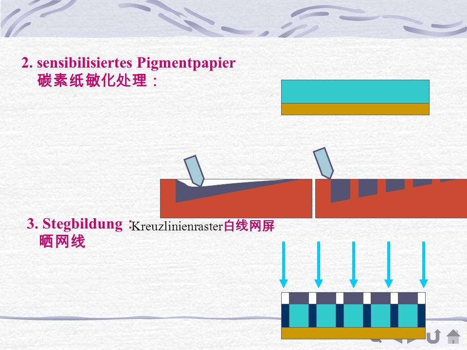 Q 2. sensibilisiertes Pigmentpapier 3. Stegbildung Kreuzlinienraster